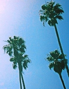 Juicy-Couture-Palm-Trees-Crop